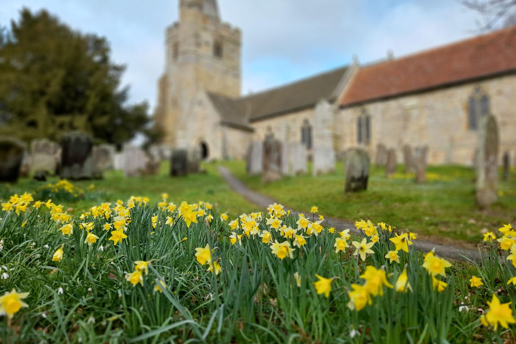 Daffodils in Lamberhurst Churchyard